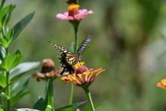 花と蝶MDCXII!