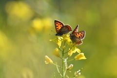 花と蝶DXXI!