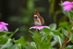花と蝶MDCCXII!