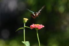 花と蝶MDCCL!