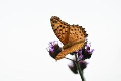 花と蝶MCCCXCIII!