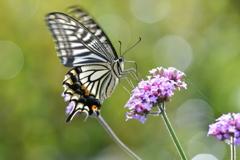 花と蝶MCCXXXVII!