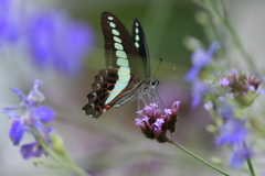 花と蝶MCCCXCIV!
