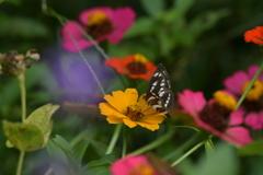 花と蝶MMCCXLVIII!