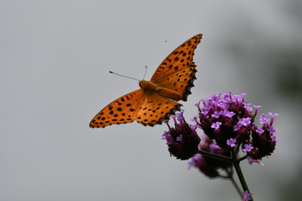 花と蝶MCDIV!