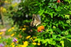 花と蝶CMXXXVIII!