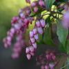 季節の花DXCVI!