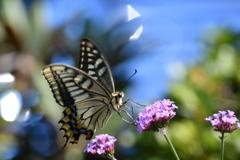花と蝶CMXLVIII!