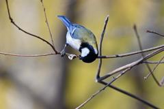 里山の野鳥LXXXVIII!