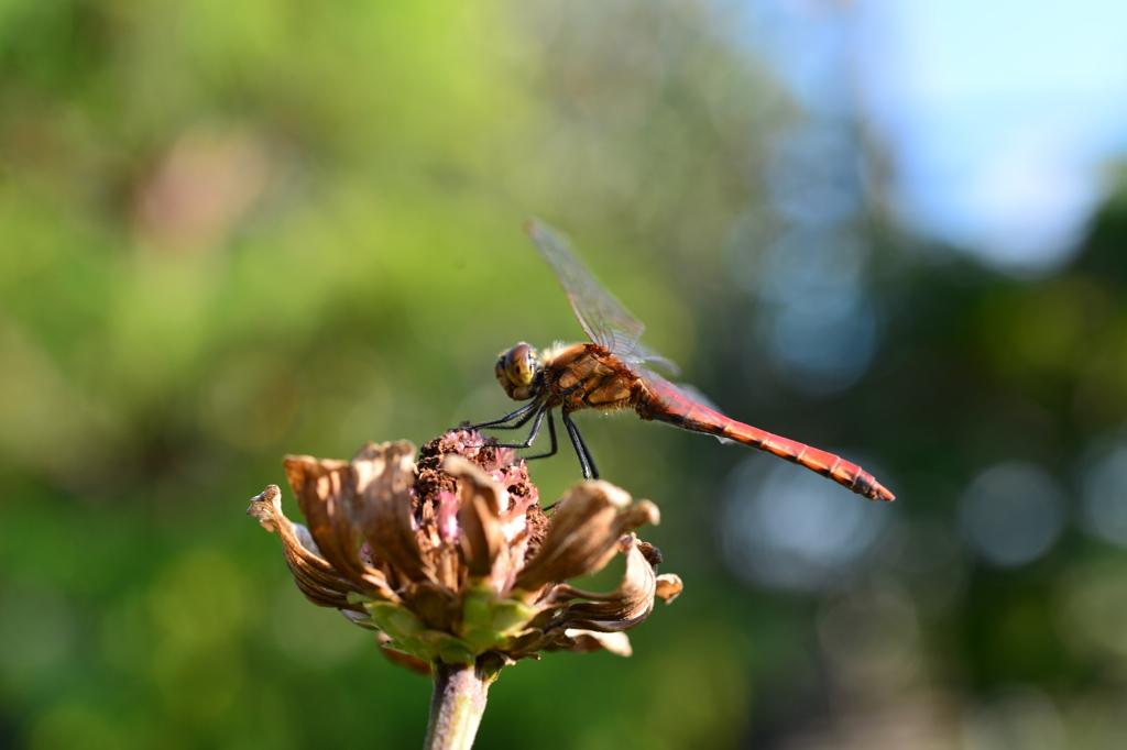 虫・昆虫と花CLXIV!