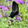 花と蝶MXXXIV!