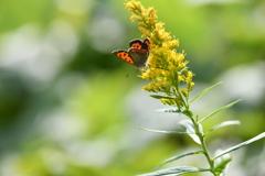 花と蝶CDLXIV!