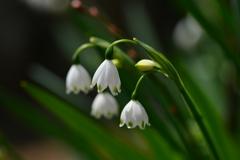 季節の花CCCXXIX!