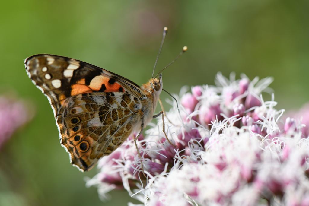 花と蝶CDXLVII!