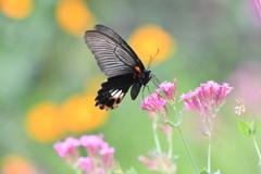 花と蝶MXLV!