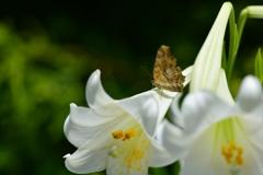 花と蝶CCV!
