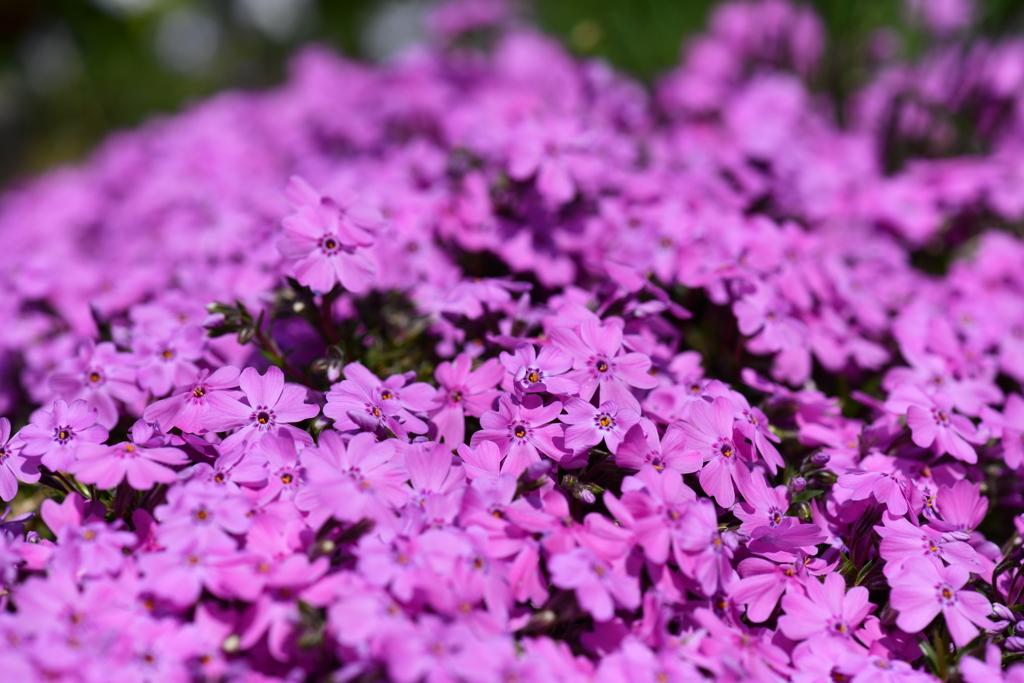 季節の花DCXLIV!