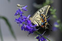 花と蝶MCCLVI!
