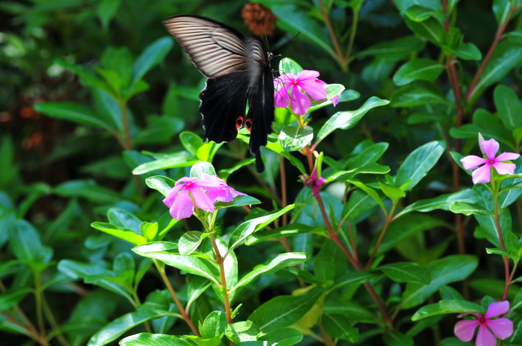 花と蝶MDLVII!
