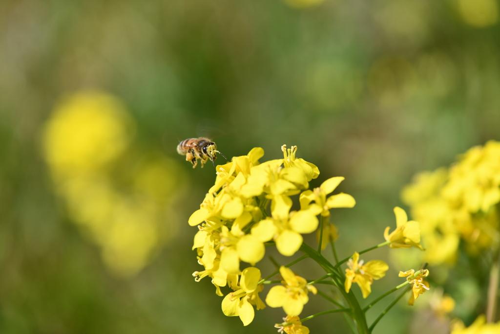 虫・昆虫と花CLXVIII!