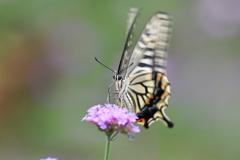 花と蝶DCCCLIX!