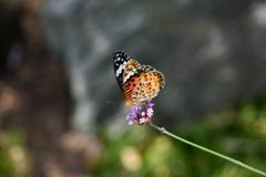花と蝶DCCCIX!