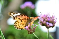 花と蝶MCCCXCVI!