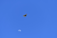里山の野鳥CXXXI!