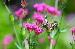 花と蝶MXLIV!