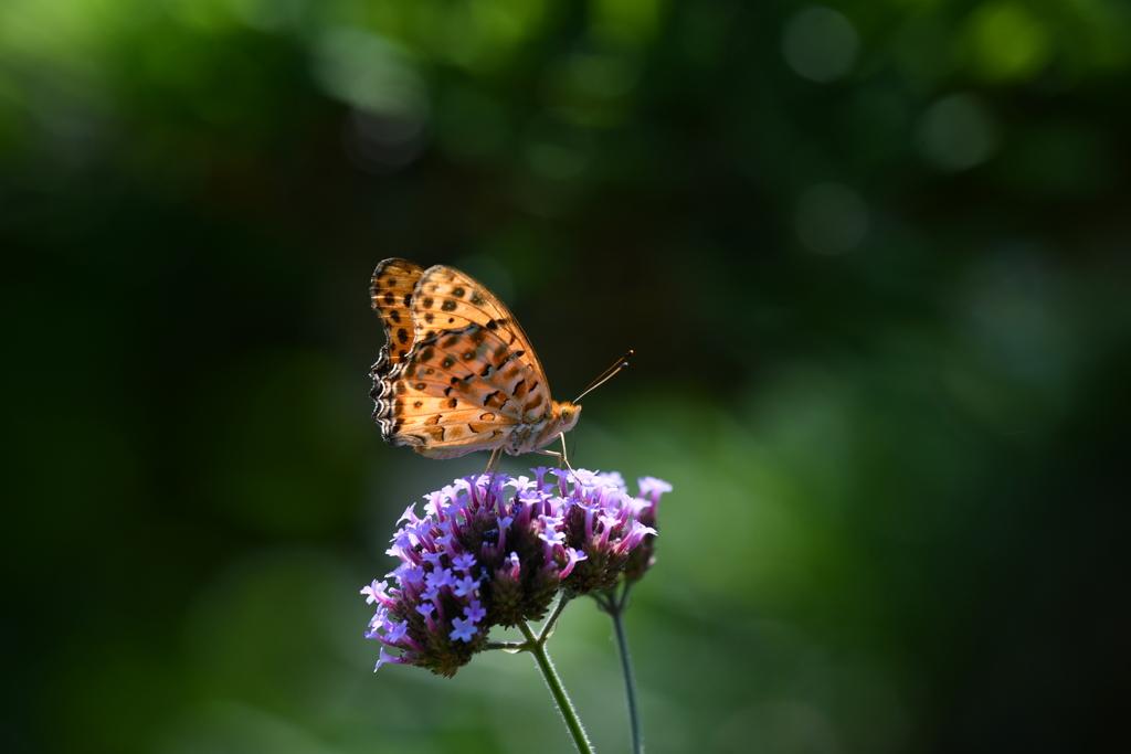 花と蝶MCCCLXXVI!
