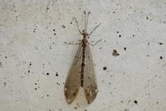 里山の昆虫LXXVIII!