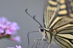 花と蝶DCCCLXII!