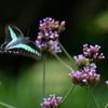 花と蝶MCDXXV!