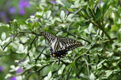 花と蝶DCCCLVII!