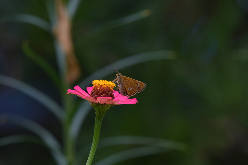 花と蝶MMCCXXVII!