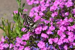 花と蝶DXXVIII!