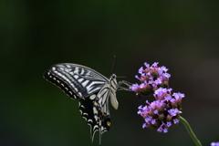 花と蝶MMCCXLIV!