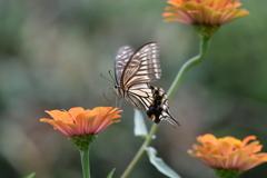 花と蝶MDCCXXVIII!