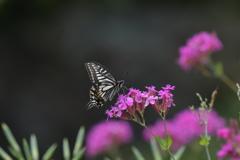花と蝶MDCCCLXX!