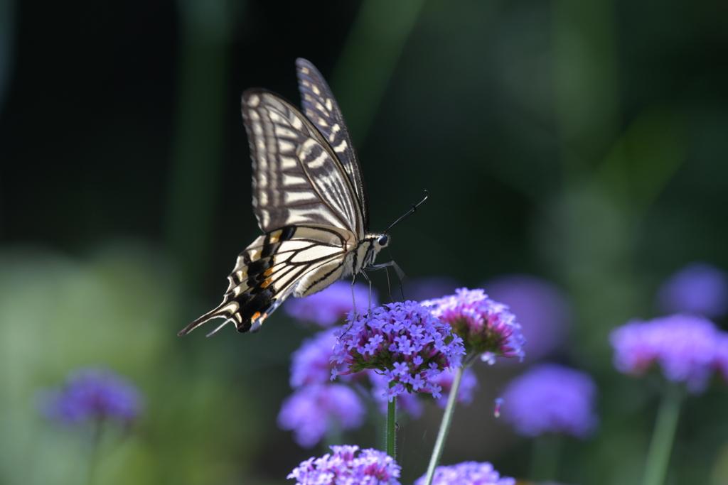 花と蝶MMLXXX!