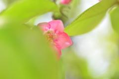 季節の花DCLXV!