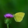 花と蝶Ⅹ!