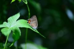 里山の蝶LXXXVIII!