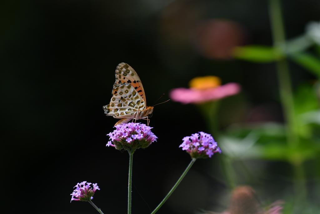 花と蝶MDLXV!