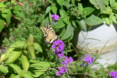花と蝶MDCCLXVII!