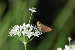 花と蝶MDCCXXII!