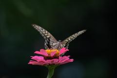 花と蝶MMCCXLVI!
