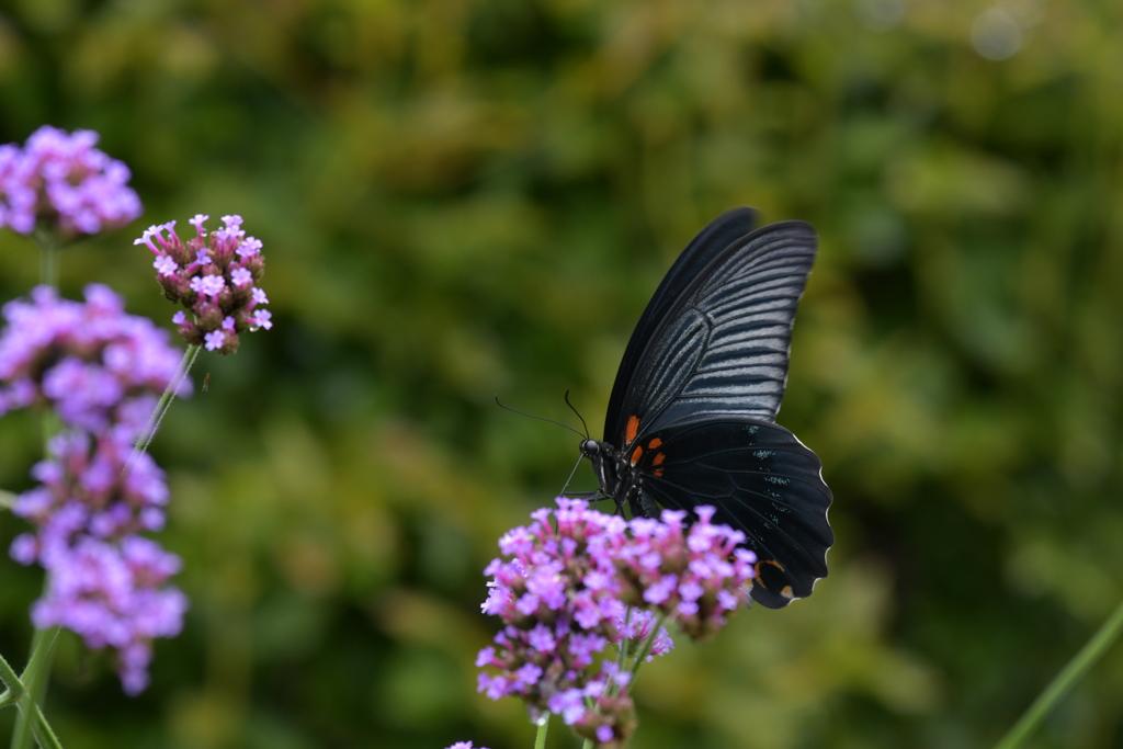 花と蝶MMCXLIII!