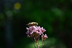 虫・昆虫と花CLXIII!
