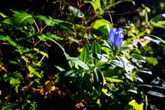 山を彩る青